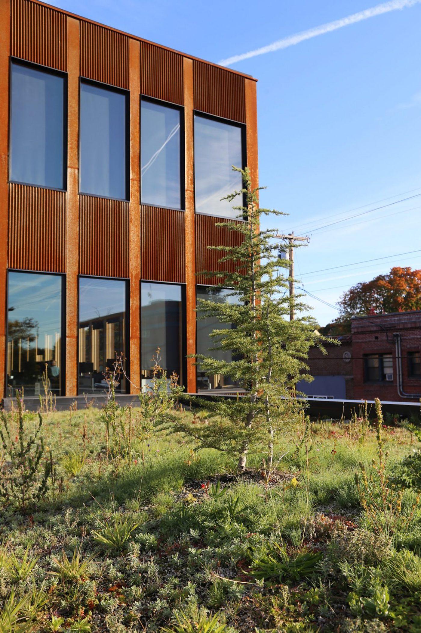 Rooftop garden next to weathering steel facade