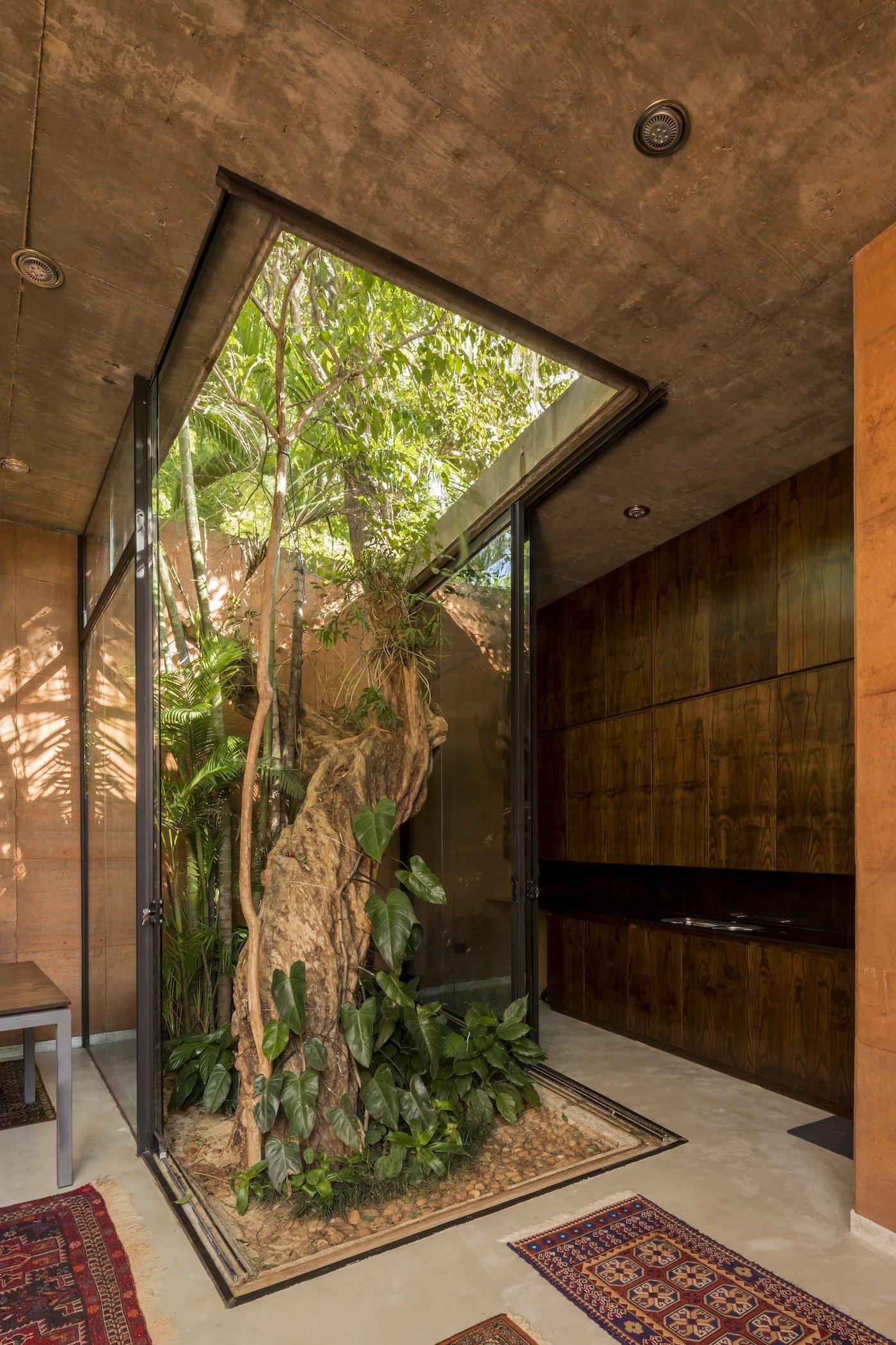 Tree inside rammed earth building