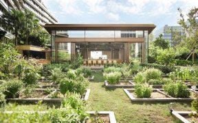 View across garden beds at urban farm Nature Discovery Park, Hong Kong