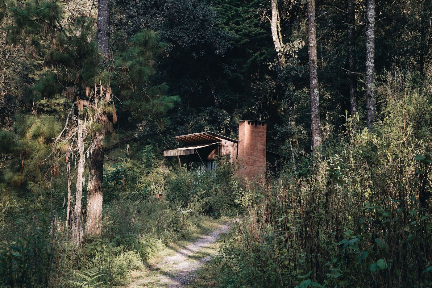 View through bush towards off-grid timber cabin