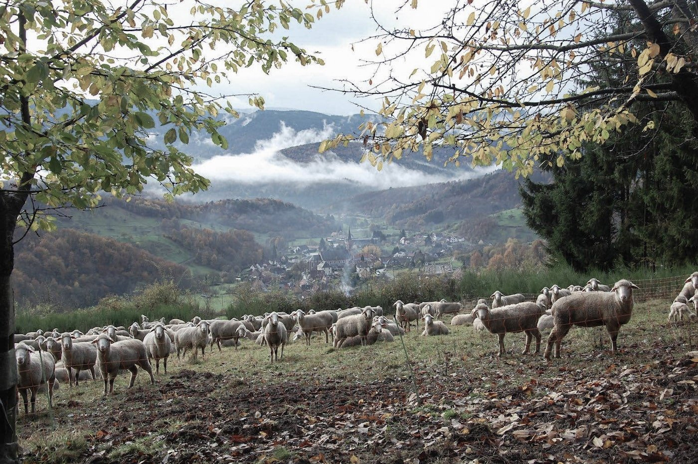 View of valley with sheep and mountains beyond