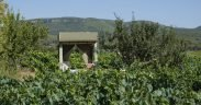 View across vineyards towards eco off-grid EV