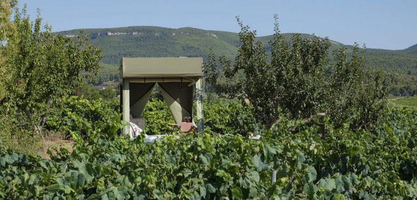 View across vineyards towards eco off-grid EV