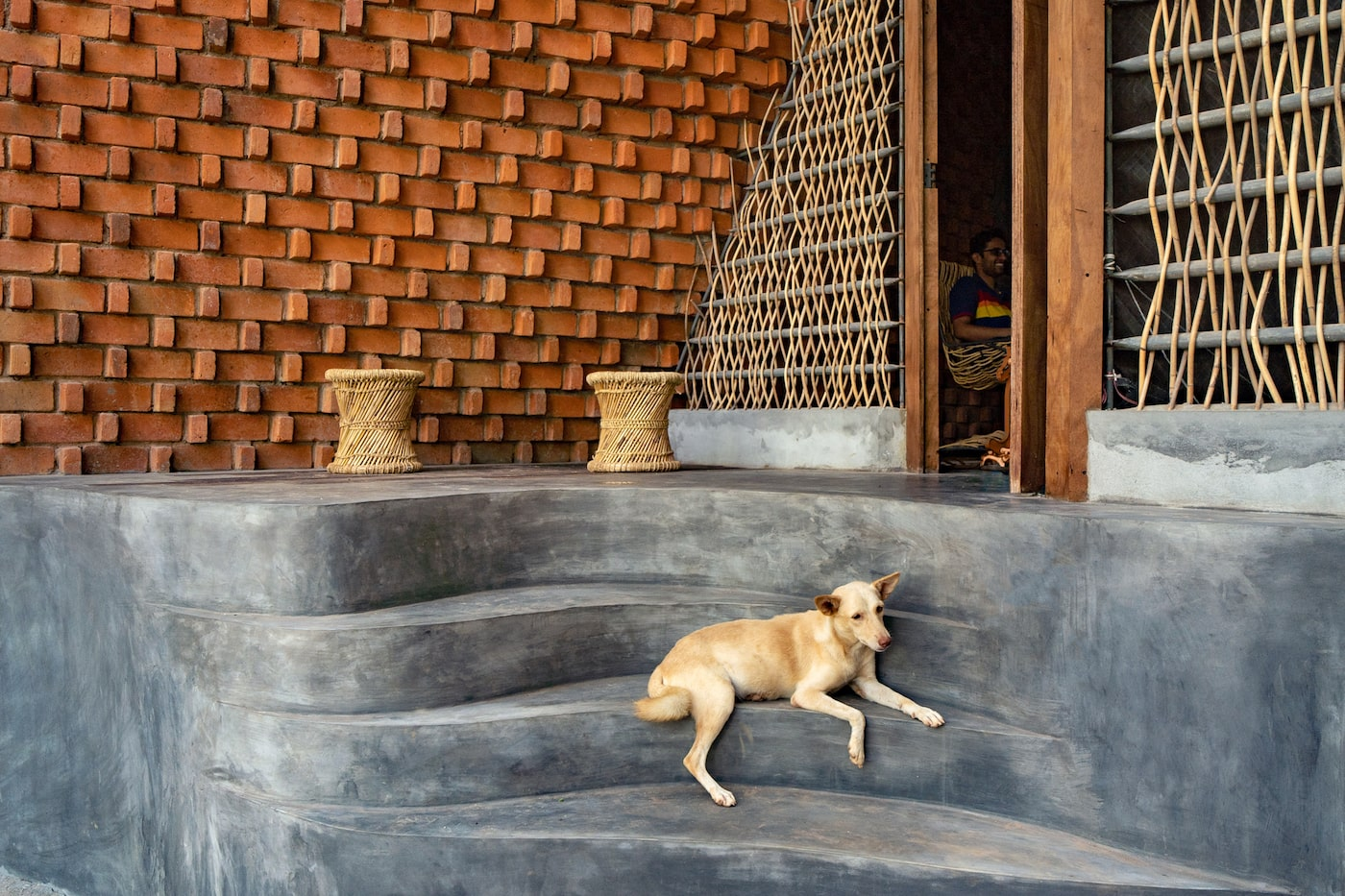 Dog sitting on concrete entry steps of brick home